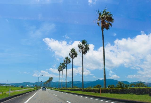 宮崎県の青空とヤシの木